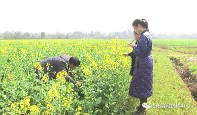 崇阳:农技员下田 无人机上岗