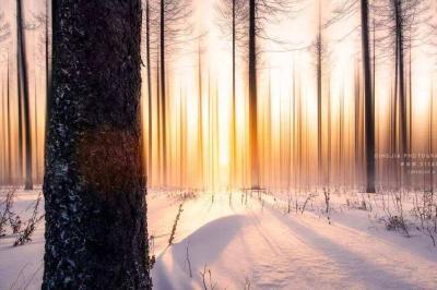 【凤池夜读】第240期丨明洁朗读《冬天的情调》(节选)