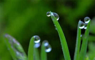 【凤池夜读】第286期丨明洁朗读《春雨》
