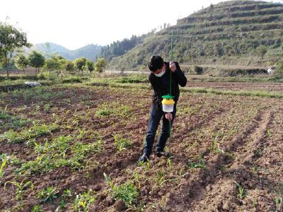 长江云——做好害虫防治  通山县通羊在行动