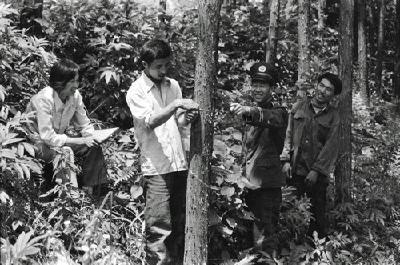 【图说通山】百集历史图文第82集:满目青山话林业