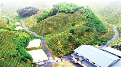 咸宁日报——乡村公路美如画