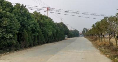 【应城最美乡村评选】汤池镇蔡岭村