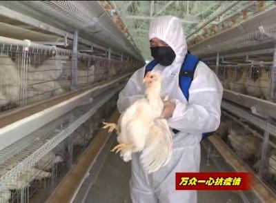 应城农业生产:不负春光复工忙