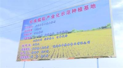 【湖北日报】产供销一体化,金丰粮油有了新目标