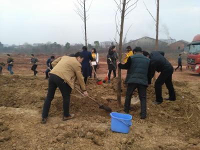 市科技局积极参加义务植树活动