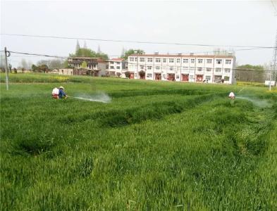 南城:推进春季小麦病虫害防治工作