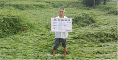 孛畈镇三农服务让农户灾年不受灾