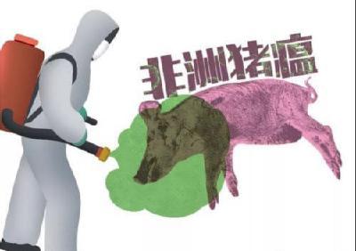 张志敏调研我市非洲猪瘟防控和畜禽养殖污染治理工作