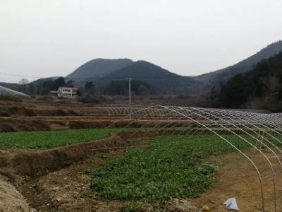 培育特色种植业 助力乡村脱贫出列