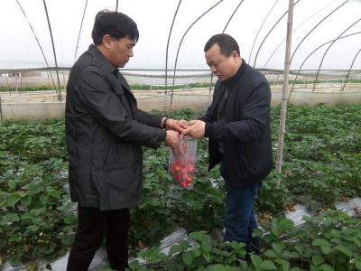 市农业农村局开展草莓专项抽检活动