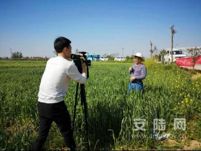 安陆市大力开展小麦病虫害防治