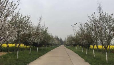 从清洁到美丽的蝶变——安陆市辛榨乡人居环境整治走笔