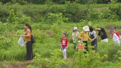 """安陆市雷公镇:""""石瓦之乡""""的绿色崛起"""