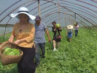 陈维楚:发展有机农业 坚守食品安全