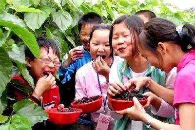 麒麟西瓜未退市 凌风枇杷又来袭——安陆市烟店镇农业供给侧改革见成效