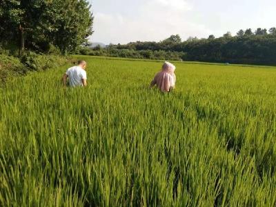 安陆市王义贞镇全力护水保灌溉