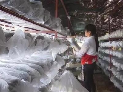 """带头兴产业——安陆300多个""""田园党小组"""" 活跃在乡村振兴一线"""