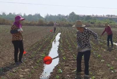 安陆市辛榨乡蒋堰村:发展绿色扶贫产业 壮大村级集体经济