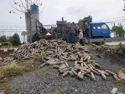 安陆市棠棣镇董榨村:引联带扶,食用菌种出致富路