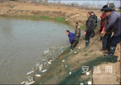 """烟店镇董桥村刘有德的""""扶贫鱼""""脱销了"""