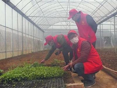 深入春耕一线 服务农业生产 ——安陆市农业技术推广中心4支技术服务队深入春耕一线
