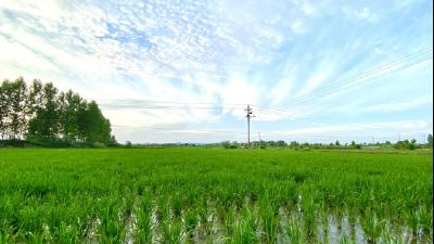 """木梓乡:7万亩稻田喜迎""""及时雨"""""""