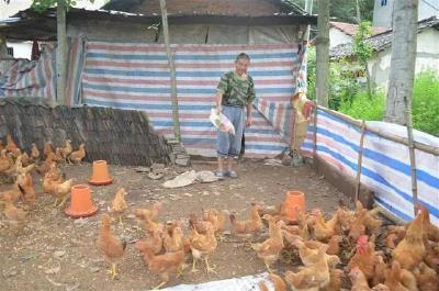鸡、鸭、猪、牛、鱼……只要肯干,脱贫不难!