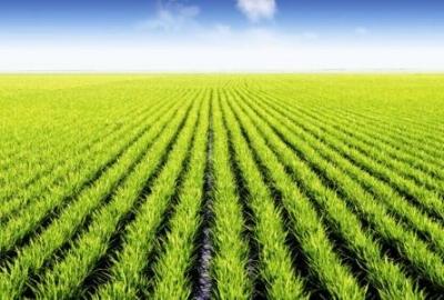 江斌调研指导全市春耕备耕工作  加强农资市场监管 加快培育农业市场主体 推进农业现代化