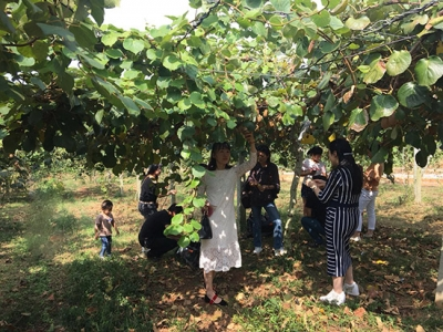 神山镇开展猕猴桃采摘活动 庆首届农民丰收节