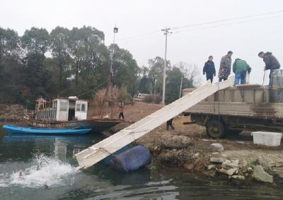 投放鱼苗18.2万斤!赤壁市2019年陆水湖增殖放流活动启动