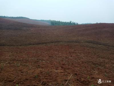 赤壁黄盖湖:百亩荒山披绿装,精准灭荒助脱贫
