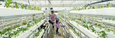 车埠镇小罗湖田园综合体:现代农业引领乡村产业振兴