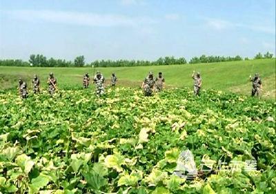市领导检查四邑公堤赤壁段防汛工作