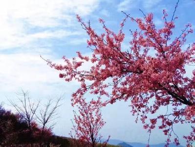 美好乡愁 美丽的村花