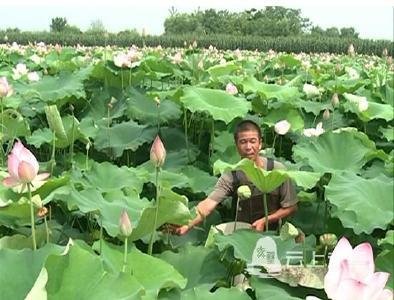 黄盖湖镇:发展特色农业  助力农民致富