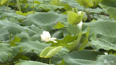 【赤壁】让乡村值得眷恋——把生活过成诗:记东柳人的一天