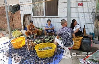 科技扶贫绘蓝图——赤壁镇太平口村驻村工作队扶贫纪实