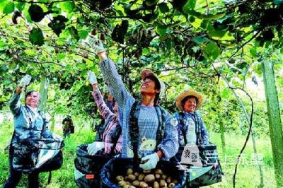 一场不容错过的猕猴桃产业盛会,赤壁在等您!