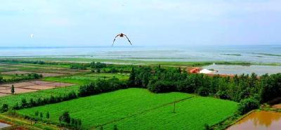 从荒湖滩到梦里水乡,黄盖湖国营农场60年巨变!