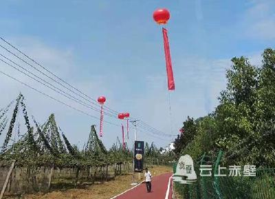 看产业 见未来 神山兴农助力2019长江猕猴桃产业峰会顺利召开