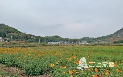 【迎盛会 看变化】赵李桥镇:抓住节会契机 建设美丽乡村