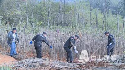赤壁市专项整治生态新区红线范围抢栽抢种乱象