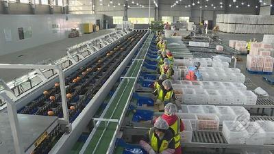 赤壁神山兴农科技有限公司:坚持诚信经营理念 打开全国市场销路