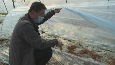 【一线写实】赤壁镇东柳村:疫情防控 农业生产两促进两不误