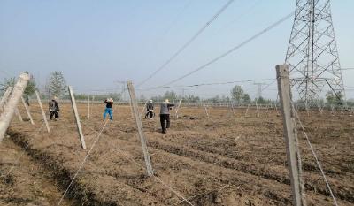 柳山湖镇:吊瓜产业引进来 农民百姓笑开颜