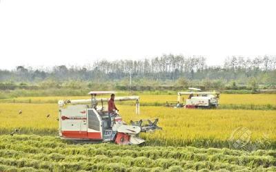 """【赤壁高质量发展之变⑰】守住""""米袋子""""  赤壁粮食生产规模化产业化发展"""