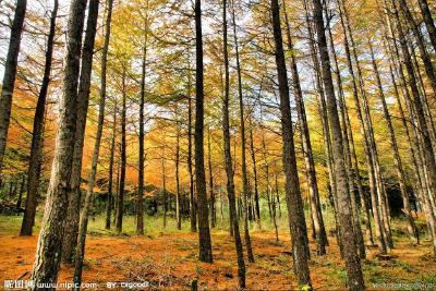 我国森林覆盖率近23% 2019年完成退耕还林还草80万公顷