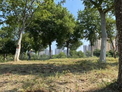 积极应对高温高湿 保护园林绿化成果