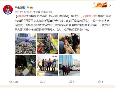 【孝警要闻】非法捕捞珍稀特色水产, 15人被刑事拘留!